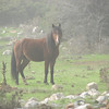 Horse (near entrance of Spil Dağı Milli Parki)