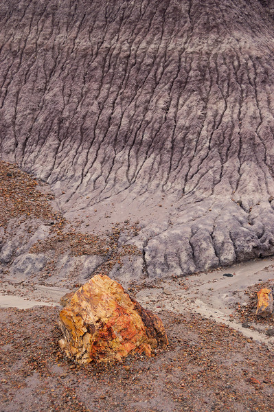 """I have passed through the small Petrified Forest National Park a number of times but today it was raining in the high desert. Rain brings out the astonishing colors in the stone and mud. The purples in this shot are fairly accurate. The image was color balanced against a control shot with a <a href=""""https://www.amazon.com/WhiBal-G7-White-Balance-Studio/dp/B004G3M36Q"""">Whibal (click here)</a> card. The mud really is purple!"""