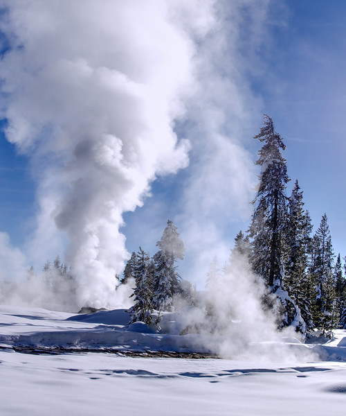 A three frame handheld panorama of an erupting Yellowstone geyser behind a snow covered pine. I used Affinity Photo to directly build this image from NEF files. The highlights in the brightest parts of the geyser plume are blown. I could probably recover highlight detail by processing each frame before panorama stitching.