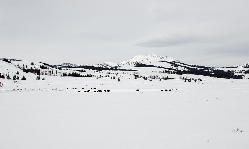 The snow coach stopped just before we dropped down off the Yellowstone plateau. This was my last picture of the park. I'll be back: perhaps next winter.