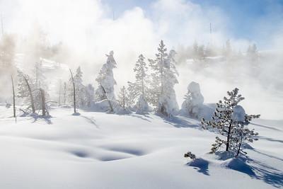 Snow laden trees in geyser mist.