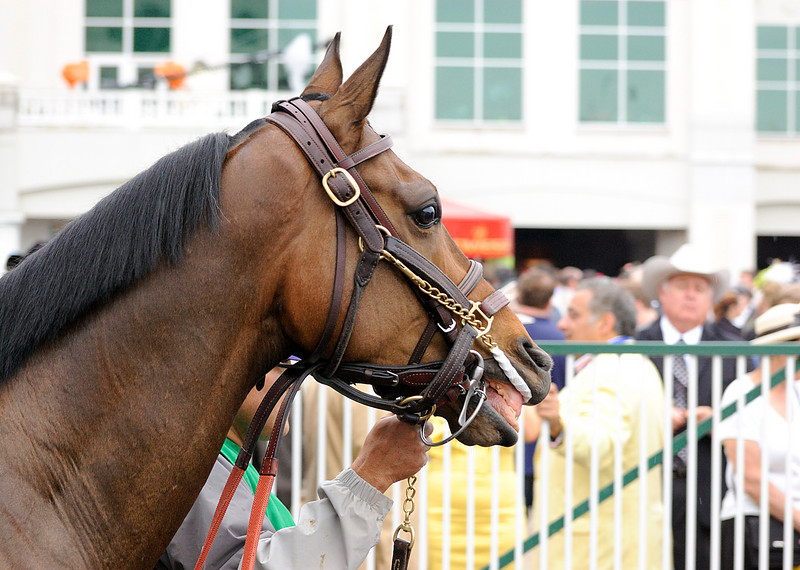 The best groomed vertabrates at Churchill Downs were the horses.  They out classed all the dolled up woman and beady guys.  Look at this animal's haircut. It is  better than any salon and probably more expensive.