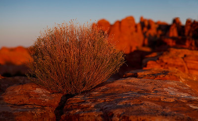 Sunrise at Devil's Garden - Arches National Park