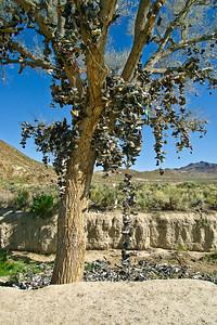 Shoe Tree Near Middlegate, Nevada (20090509_PX1_5555-A1)