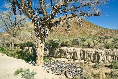 Shoe Tree Near Middlegate, Nevada (20090509_PX1_5552-A1)
