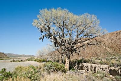 Shoe Tree Near Middlegate, Nevada (20090509_PX1_5549-A1)