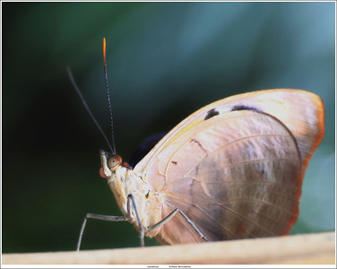 (unedited) Butterfly