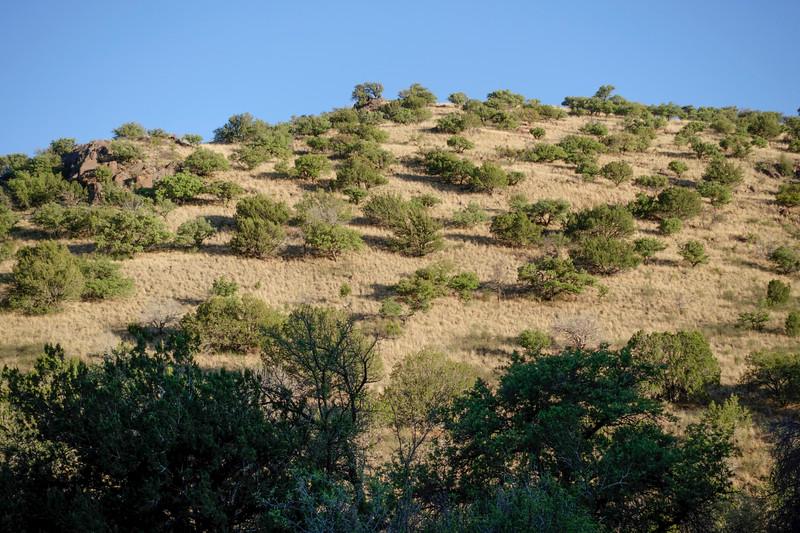 4-20-16 Scenery - Davis Mountain SP, TX-00850