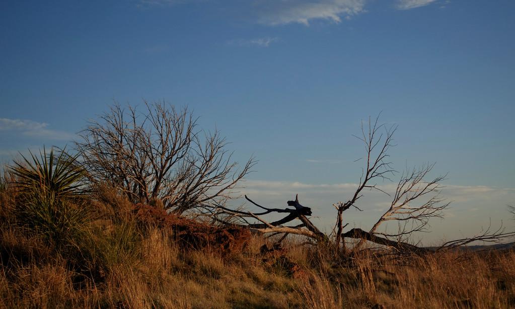 4-20-16 Scenery - Sunset - Davis Mountain SP, TX-00874