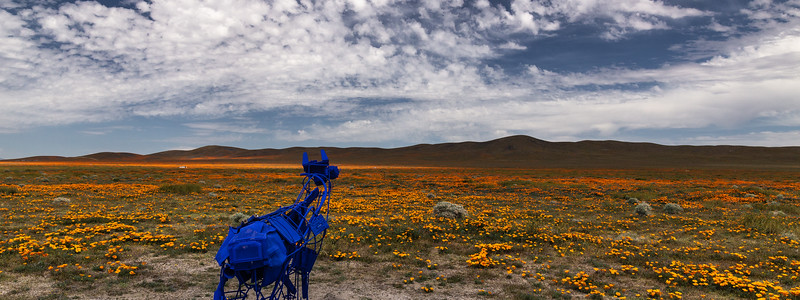 Art Installation and Poppy Fields, Antelope Valley