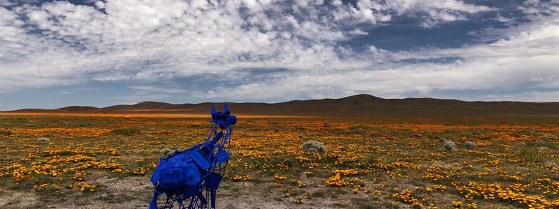 Art Installation and Poppy Fields, Antelope Valley