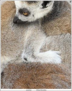 At Wildlands Zoo, Emmen NL Unedited except for some cropping and the added frame.