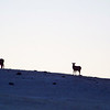 February 28th, day 5:  We find a ridge from which we'll enjoy the sunrise.  These elk were also waiting for sunrise.