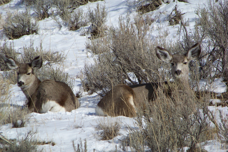 After our tour ended back at the hotel, Jeane and Patti headed back out for more wildlife watching.  We found these Mule Deer, who were obviously very concerned with our presence.