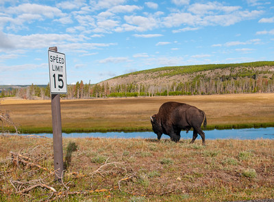 Bison Speed Zone