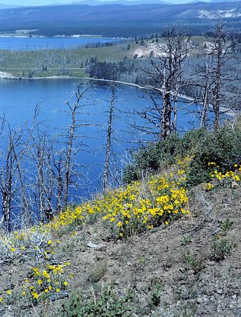 Dale_Yellowstone_Img045