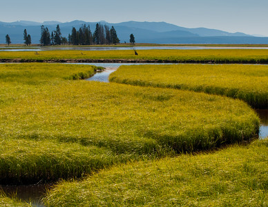 Yellowstone Water and Grass