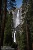 Upper & Lower Yosemite Falls framed by trees. Seen from the start of the Lower Yosemite Fall trail. (3/29/2010, Yosemite NP)