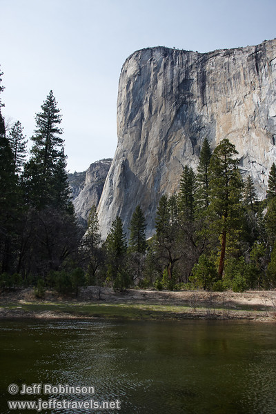 El Capitan with foreground trees and the Merced River. Seen from the south side of the Merced River near a turnout (roughly south of The Three Brothers picnic area). (3/28/10, Yosemite NP)