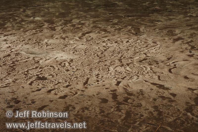 Footprints and textured sand of Mirror Lake. (3/29/2010, Yosemite NP)