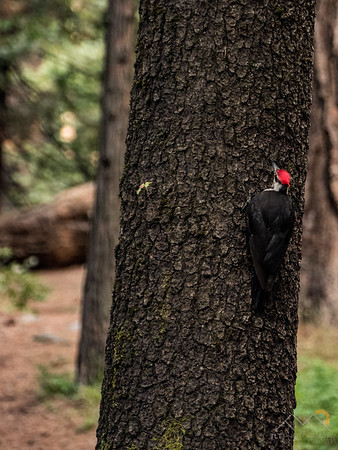 Passed by a family of red-headed woodpeckers on our way out to Josh's truck.
