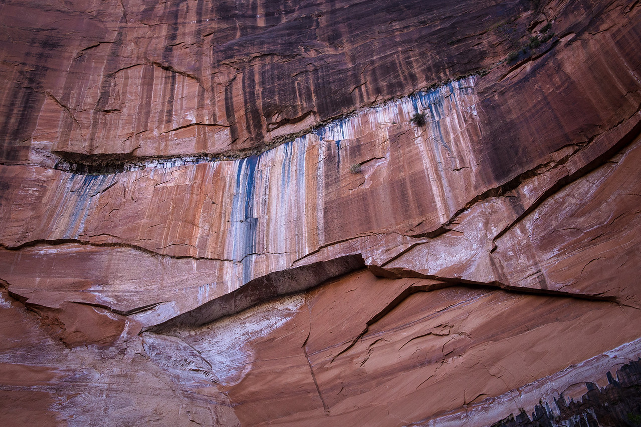 Cliff Detail above the Emerald Pools, Zion National Park