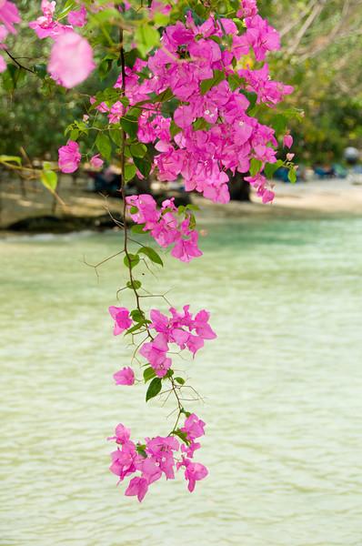 Thailand 0466