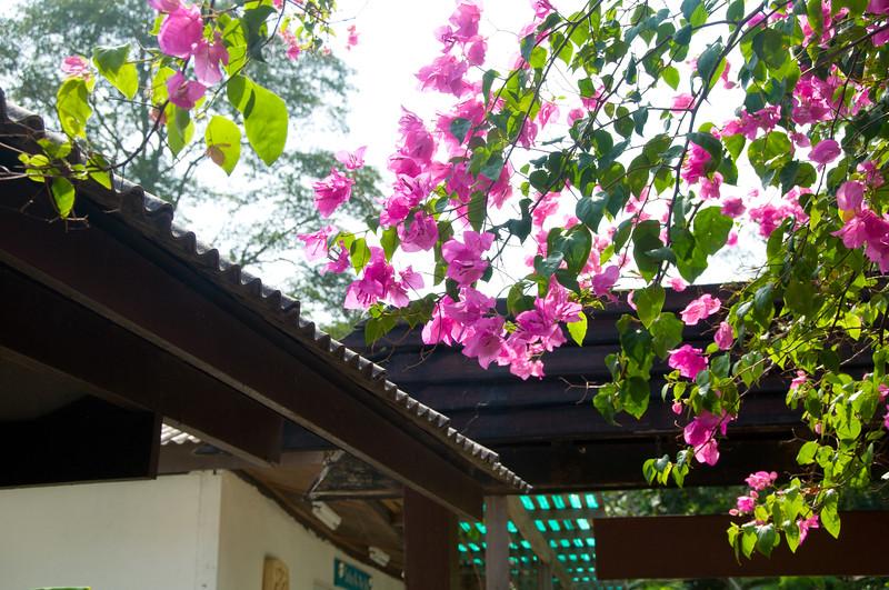 Thailand 0470