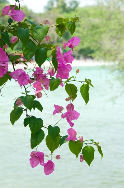 Thailand 0467