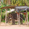 Thailand 0165