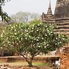 Thailand 1013