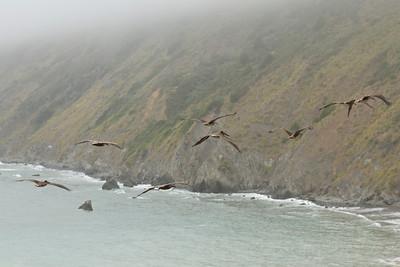 Pelicans July 23, 2012 J2312(12)