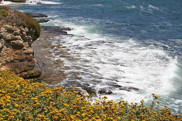 Santa Cruz, etc. 2008