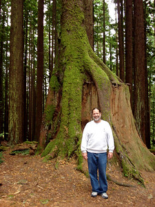 Arcata Community Forest, CA 2008