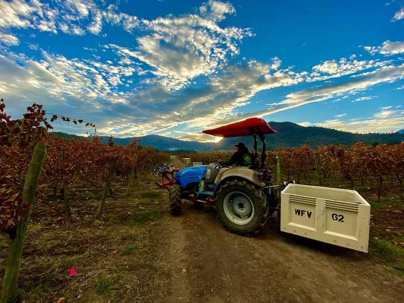 Dawn Harvest at Troon Vineyard in Oregon's Applegate Valley