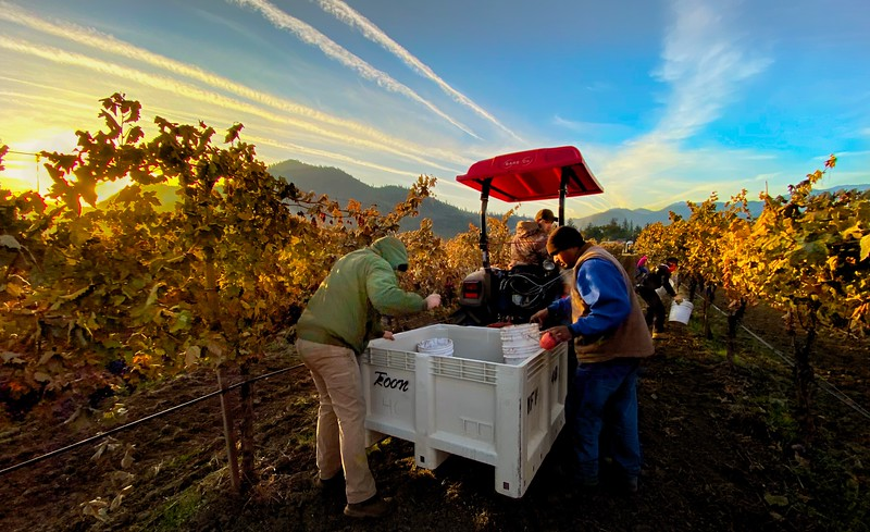 Harvest at Dawn at Troon Vineyard in Oregon's Applegate Valley