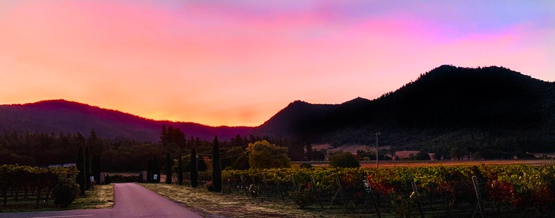 Harvest Dawn at Troon Vineyard