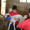 Nicholas one of the Xaghra Scouts holding a lamb