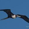 Frigate Flight