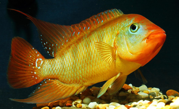 Photographing Fish In An Aquarium