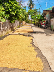 Sun drying rice on a road, the traditional method in the Philippines.