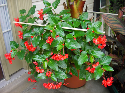 Tropical Plants in a Non-Tropical Climate