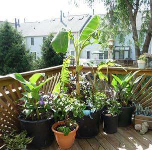 deck corner June 15, 2009