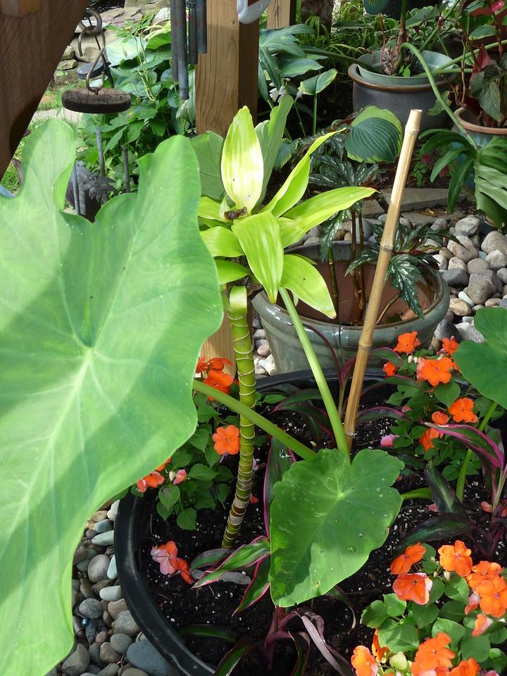 tropical plant pot