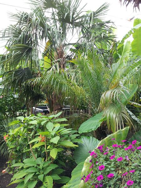 Bo's Equatorial Jungle Glen Echo Heights,. MD Aug 2013
