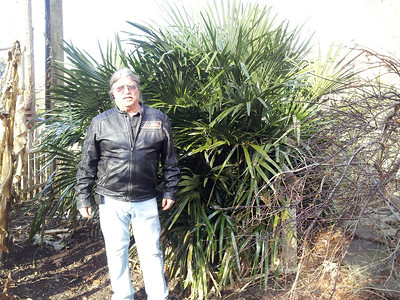 Bo's with his biggest needle palm , plant probably 35 years old, been in this spot for 4 or 5 years.