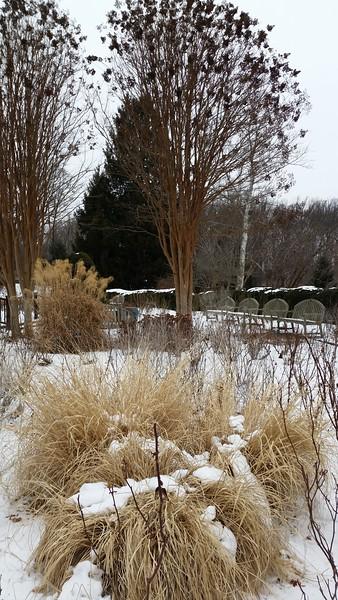 Brookside Gardens Arboretum Wheaton, MD Feb 16 2015