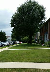 a plain old yard