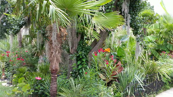 Fritz's Incredible Tropical Jungle August 2, 2014