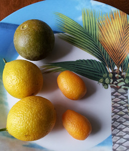 top: PVHM fruit that dropped off tree Left: ripe Thomasville Citraquat Right: grocery store kumquats